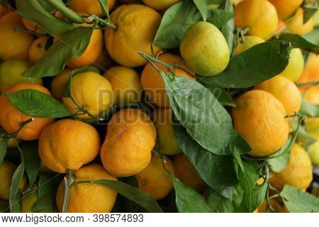 Pile Of Freshly Harvested Tangerine Fruits. Fresh Citrus Fruits Background. Growing Citrus Fruits At