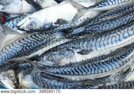 Frozen Mackerel Fish At Seafood Market. Pile Of Mackerel Fish On Shop Display.