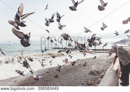 Alushta, Crimea - February 05, 2015. People Feeding Pigeons And Seagulls On Sea Embankment. Flock Of
