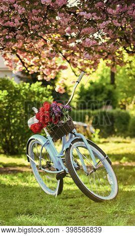 Retro Style Vintage Beach Cruiser Bicycle With Basket. Turquoise Bicycle Park Sakura Tree Pink Flowe