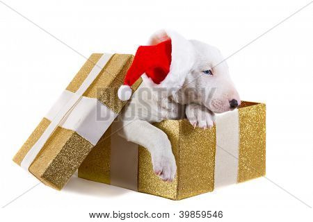 Adorable puppy in Christmas present box isolated over white