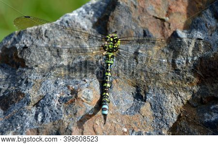 At The End Of The Summer, Hungry Hornets Attack Dragonflies And Often Defeat Them. The Fight Often E