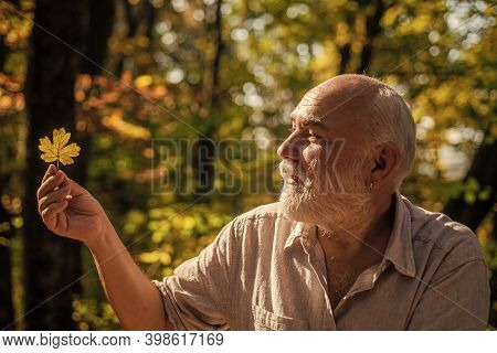 Explore World Around. Pensioner Hiking In Forest On Sunny Autumn Day. Man Enjoy Autumn Nature. Old M