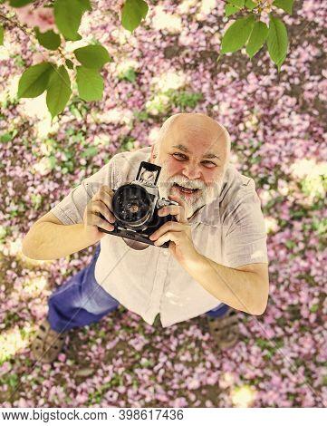 Senior Bearded Man Photographing Pink Blossom. Professional Photographer Designer. Happy Retirement.