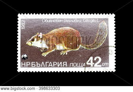 Bulgaria - Circa 1983 : Cancelled Postage Stamp Printed By Bulgaria, That Shows Edible Dormouse (gli
