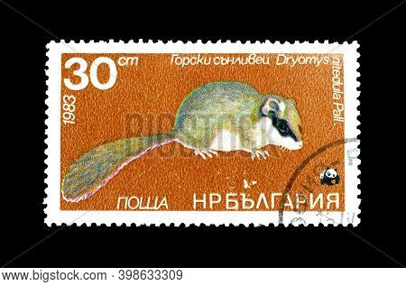 Bulgaria - Circa 1983 : Cancelled Postage Stamp Printed By Bulgaria, That Shows Forest Dormouse (dry