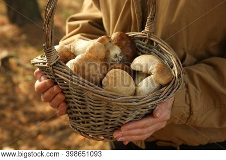 Woman Holding Basket With Porcini Mushrooms In Forest, Closeup