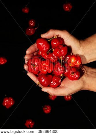 Hands Holding Red Hot Chili Habanero Peppers