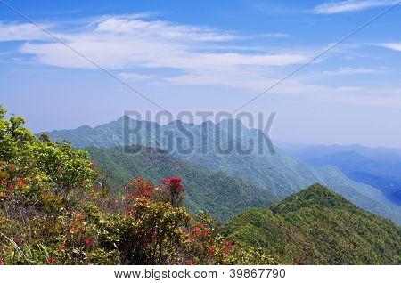 spring at nanling ridge of china