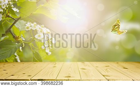 Spring And Summer Background - Blooming Hawthorn With Fresh Green Leaves, Frame In The Rays Of Sunli