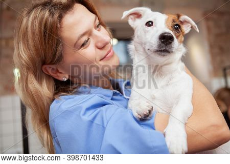 Close Up Of A Cute Healthy Happy Puppy Mature Female Vet Is Holding. Veterinarian Cuddling With Ador
