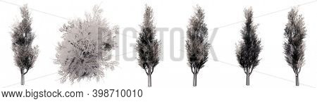 Set or collection of drawings of Yeg bushes isolated on white background. Concept or conceptual 3d illustration for nature, ecology and conservation, beauty and health