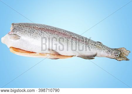 Large Raw Headless Trout On A Blue Background. Top View. Healthy Eating.