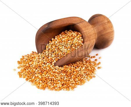 Millet In Wooden Scoop, Isolated On White Background. Unpeeled Millet Seeds.