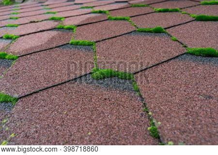 Close Up View Of Moss Infested Asphalt Shingles Roof That Needs Repair And Cleaner.