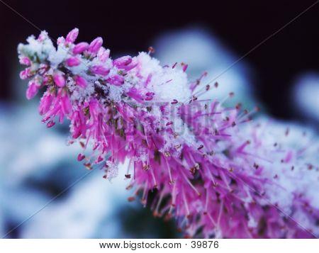 Winter Flowers #1