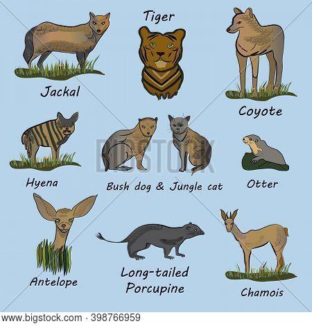 Rare Mammals: Tiger, Chamois, Coyote, Jackal, Otter, Antelope, Long-tailed Porcupine, Bush Dog, Jung