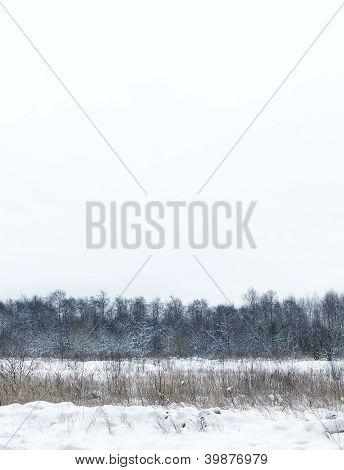 Dull Snow Winter Landscape