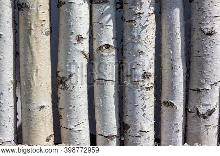 A Fence Of Birch Trunks. Paling Made Of Many Tree Trunks Of Variety Wood Type. Log From Birch Trunks
