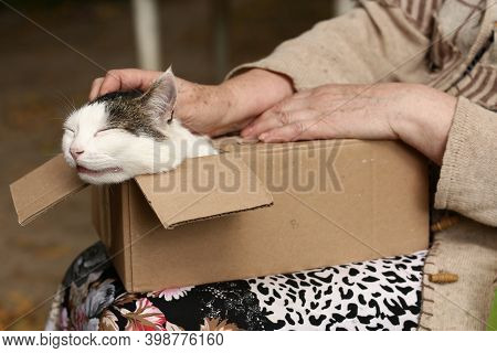 Country Funny Cat In Box On The Lap With Woman Stroking Hands Close Up Photo