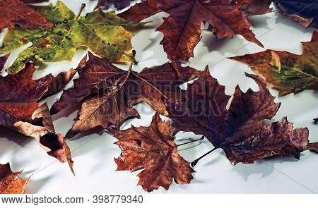 Colorful Background Of Autumn Leaves Over White