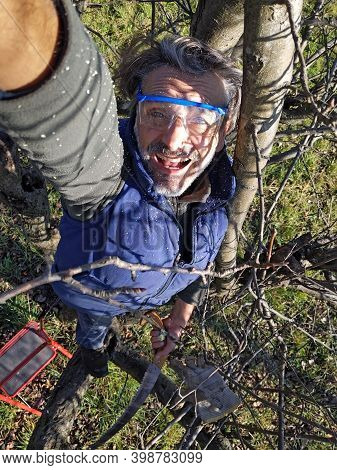 Mid Adult Caucasian Man Pruning Tree In Orchard