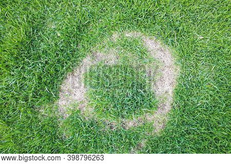 Pests And Disease Cause Amount Of Damage To Green Lawns.