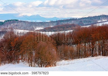 Forest On A Snow Covered Hill. Beautiful Countryside Landscape Of Carpathian Mountains. Winter Scene