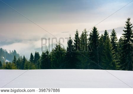 Approaching Blizzard In Mountain Landscape. Spruce Trees On Snow Covered Meadow. Bad Weather Conditi