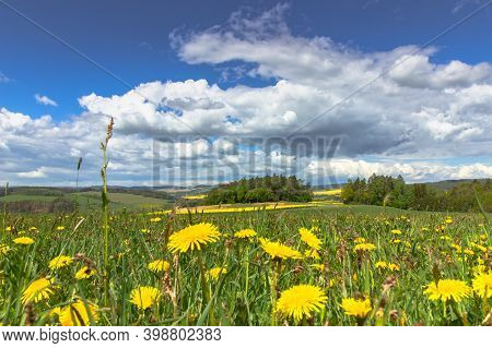Meadow Full Of Blooming Dandelions. Flowering Yellow Dandelions Closeup. Springtime In Countryside G