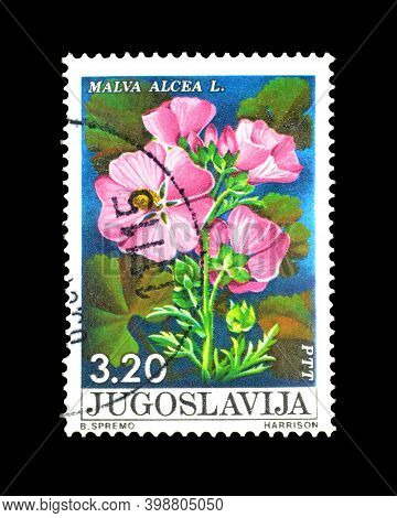 Yugoslavia - Circa 1975 : Cancelled Postage Stamp Printed By Yugoslavia, That Shows Malva Alcea Flow