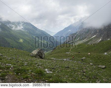 View On Stubaital Valley And Alpine Meadow With Grazing Cows At Stubai Hiking Trail, Stubai Hohenweg