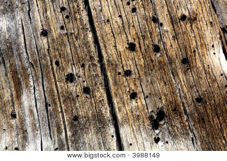 Beetle Wood Texture