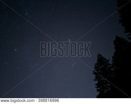 Stunning Nighttime Stars Over Giant Redwood Trees