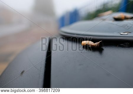 Discarded Cigarette Butt On Top Of A Street Garbage Bin, Wet On A British Usual Rainy Day