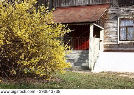 Spring Sunny Day. Near The Old Building With A High Porch In Yellow Flowers The Large Bush Of A  For