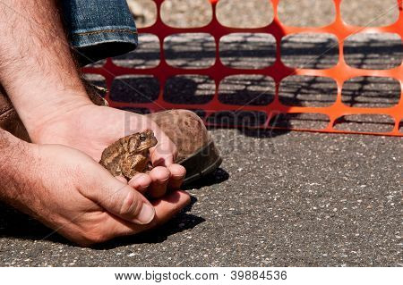 Construction worker stops work to save a little toad poster
