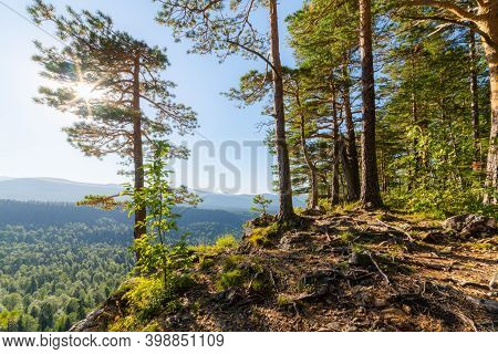 A Relict Pine Tree Grows On The Edge Of The Mountain Plateau In Mountain.