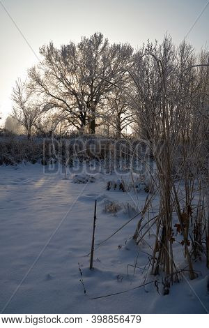 Breath Of Winter, First Ice On The Lake, Dawn On A Frosty Morning With Frost On The Grass, Close-up