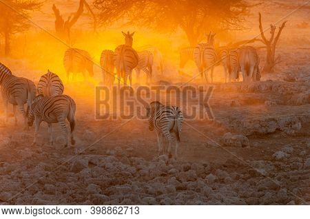 Burchells Zebras, Equus Quagga Burchellii, Walking Into The Sunset In Northern Namibia