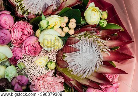 Protea Flowers Bunch. Blooming Pink King Protea Plant. Closeup. Holiday Gift, Bouquet, Buds. One Bea