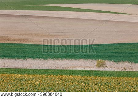 Beautiful Spring Rural Landscape With Plowed Field Curves And Wheat Grain. Rural Landscape. Spring L