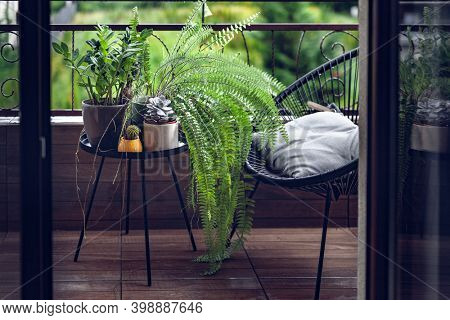 Beautiful House Plants with Water Droplets on Balcony, Zamioculcas Zamiifolia, Wild Fern, Ficus Ginseng