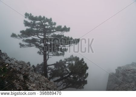 Alone Relict Pine Tree Grows On A Rock In The Fog In The Mountains. Autumn.