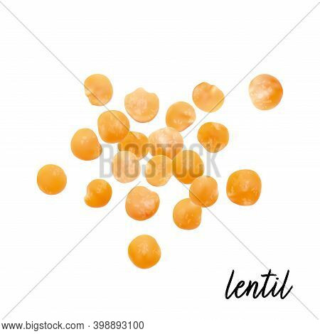 Lentils Red Isolated On White Background. Vector Illustration.