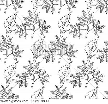 Amorphophallus Konjac Plant Seamless Pattern Hand Drawing Outline Line Style. Konjak Repeating Textu
