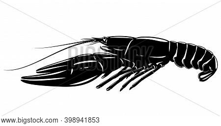 One Boiled Narrow-clawed Crayfish In Black And White Isolated Illustration, Realistic Freshwater Eur