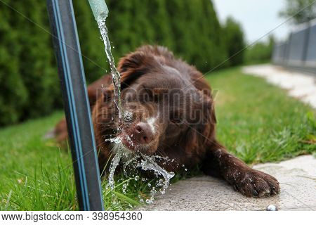 A Thirsty Dog Is Drinking Water And Looking Quite Funny.