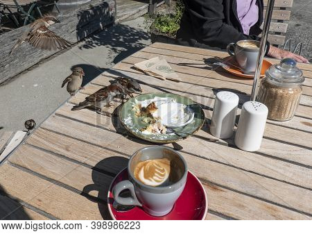 House Sparrows Arrive To Scavenge Leftovers On Cafe Table.