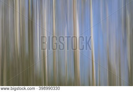 Impressionist Effect With Intentional Blur Abstract Eucalyptus Trees